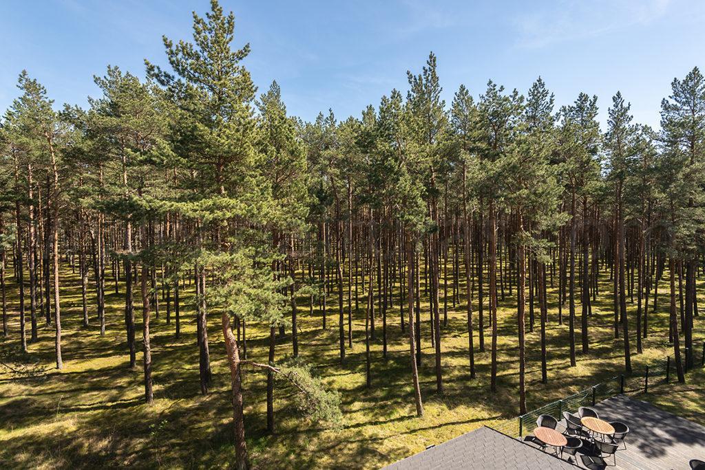 Паланга Meduza вид на лес